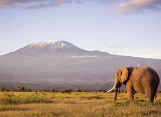 KEN.Amboseli NP.Elefant Kilimanjaro