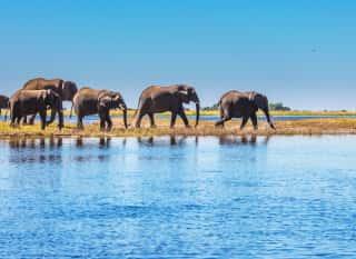 BWA.Chopbe NP.Elefanten in Wasser