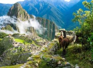 PER.Machu Picchu.Alpakas