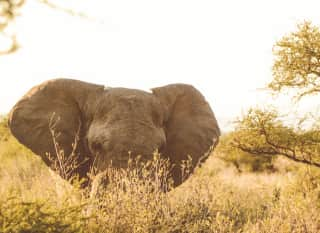 BW.Nationalpark_Elefant