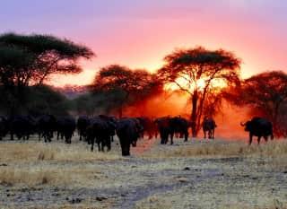 TZ.Safari-Nationalpark