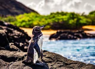 ECU.galapagos