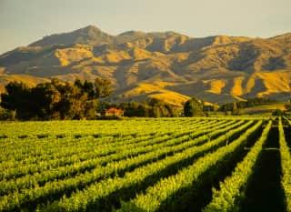 NZ_Wineyard