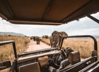 ZW.Nationalpark_Safari