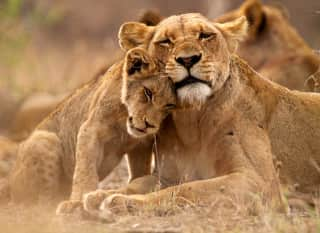 MZ.Nationalpark-Safari