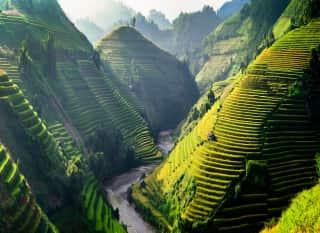 Vietnam.SaPa.Reisterrassen