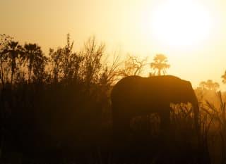 BW.OkovangoDelta_Elefant
