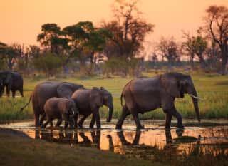 BOTS.safari