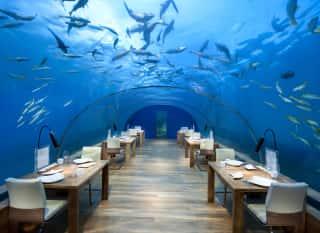 Zu Tisch mit Haien & Co.