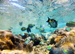 LK.Bunte Fische