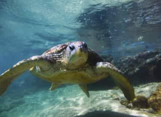 LK.Trincomalee.Riesenschildkröte