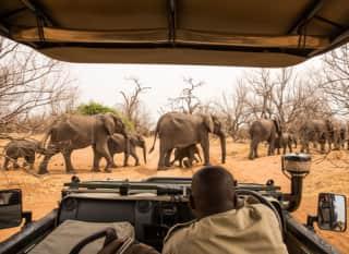 BW.Chobe Nationalpark
