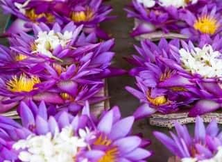 LK_flowers