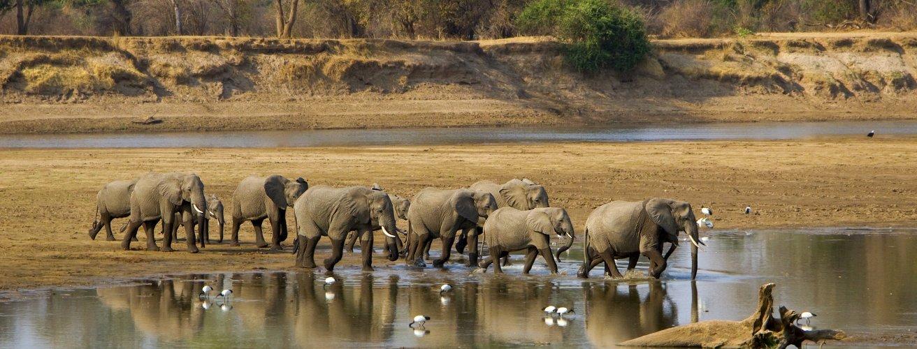 SMB.Elefantenherde Eine Elefantenherde