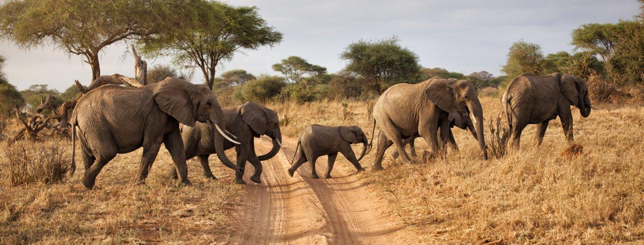 TZ.Elefanten Eine Elefanten Familie, die die Straße überquert