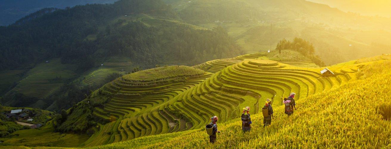 VN.Sa Pa.Reisfeld Frauen tragen Körbe durch Reisfelder.