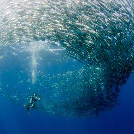 Durch traumhafte Unterwasserwelt tauchen