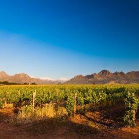 Weintasting in den Weinbergen von Stellenbosch