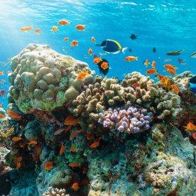 Schnorcheltour durch bunte Korallenriffe