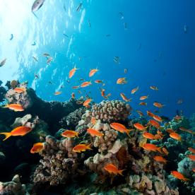 Schorcheln durch die bunte Unterwasserwelt