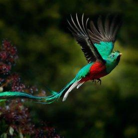 Tropische Paradiesvögel beobachten