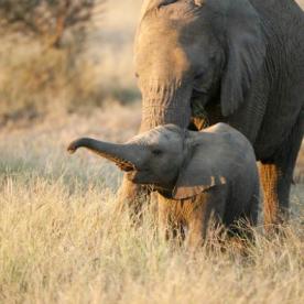 Elefanten-Safari im berühmten Bwabwata Nationalpark