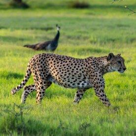 Arabisches Wildlife im Reservat beobachten