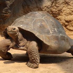 Ausflug zu den Riesenschildkröten