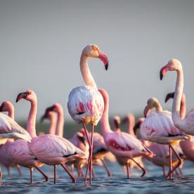 Flamingos, Schildkröten und Delfine auf Masirah Island
