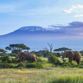 """Das """"Dach Afrikas"""" erblicken"""