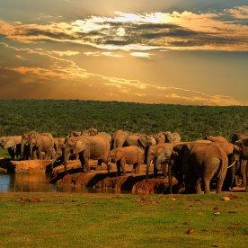 Elefanten-Safari im größten Nationalpark am Ostkap