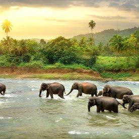 Elefanten in freier Wildbahn erleben