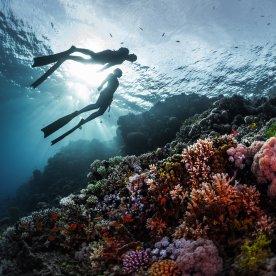 Durch bunt schillernde Unterwasserwelt tauchen