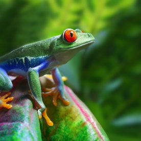 Exotische Tiere im Regenwald entdecken