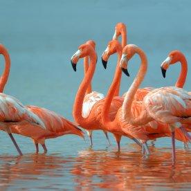 Mangrovenbootsfahrt zu den Flamingos