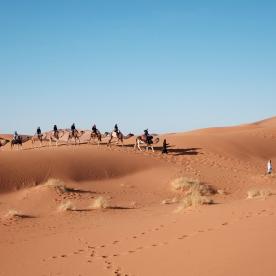 Mit dem Kamel durch die Dünen der Wahiba Sands