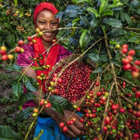 Kaffee mit Einheimischen zubereiten