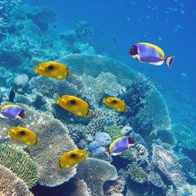 Durch farbenprächtige Fischschwärme schnorcheln