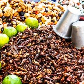 Agavenschnaps & geröstete Heuschrecken probieren