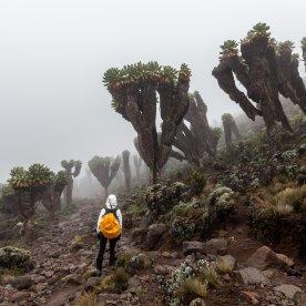 Durch die einmalige Flora und Fauna wandern