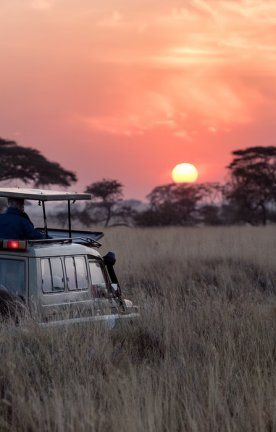 TZ.Serengeti Safari sundown