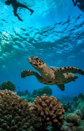 Seychellen.Schildkröte