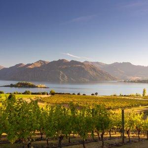 NZ.Wanaka_Lake Der Blick auf grüne Weinreben mit Seeblick.