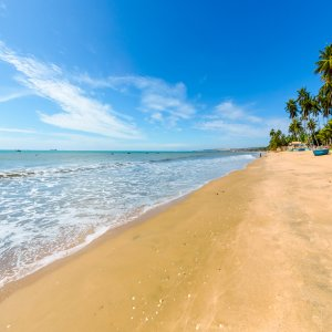 VN.Mui_Ne_Strand Der Blick auf einen Strand mit Palmen.