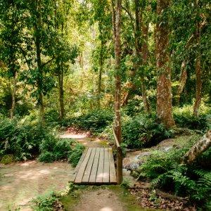 Laos.Kuang_Si_Wasserfall_Natur Sattgrüne, idyllische Vegetation auf dem Weg zum Kuang-Si-Wasserfall