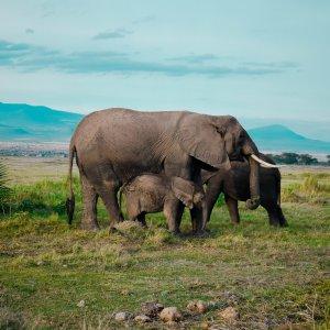 Amboseli Nationalpark Elephants in Amboseli National Park