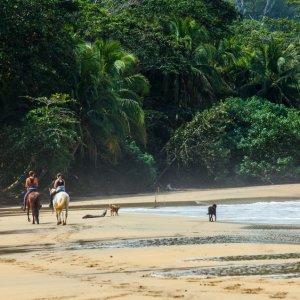 CR.Puerto_Viejo_de_Talamanca_Punta_Uva_Horse_Riding Der Blick auf reitende Pferde am Strand von Punta Uva in Costa Rica.