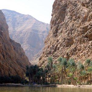 OM.Wadi Shab 3 Palmen in der Oase Wadi Shab im Oman