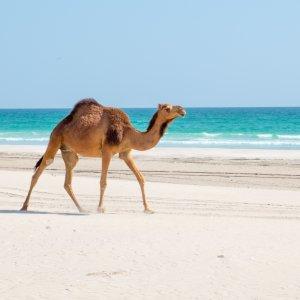 """OM.Salalah Küstenansicht auf die Stadt """"Salalah"""" im Oman von der sogenannten """"Taqah-Hochebene"""""""