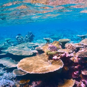 MV.Sued_Ari_Atoll_Korallen Buntes Korallenriff am Süd-Ari-Atoll, Malediven